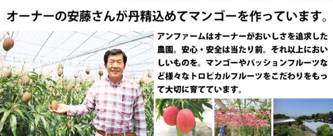 オーナーの安藤さんが丹精込めてマンゴーを作っています