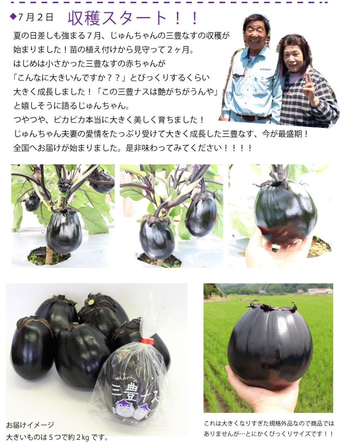 じゅんちゃんの三豊ナス収穫が始まりました!