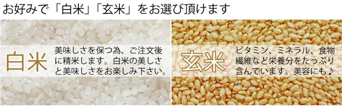 白米か玄米からお選び頂けます