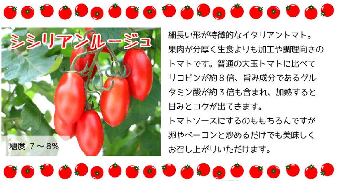 普通の大玉トマトに比べてリコピンが約8倍、旨み成分であるグル<br /> タミン酸が約3倍