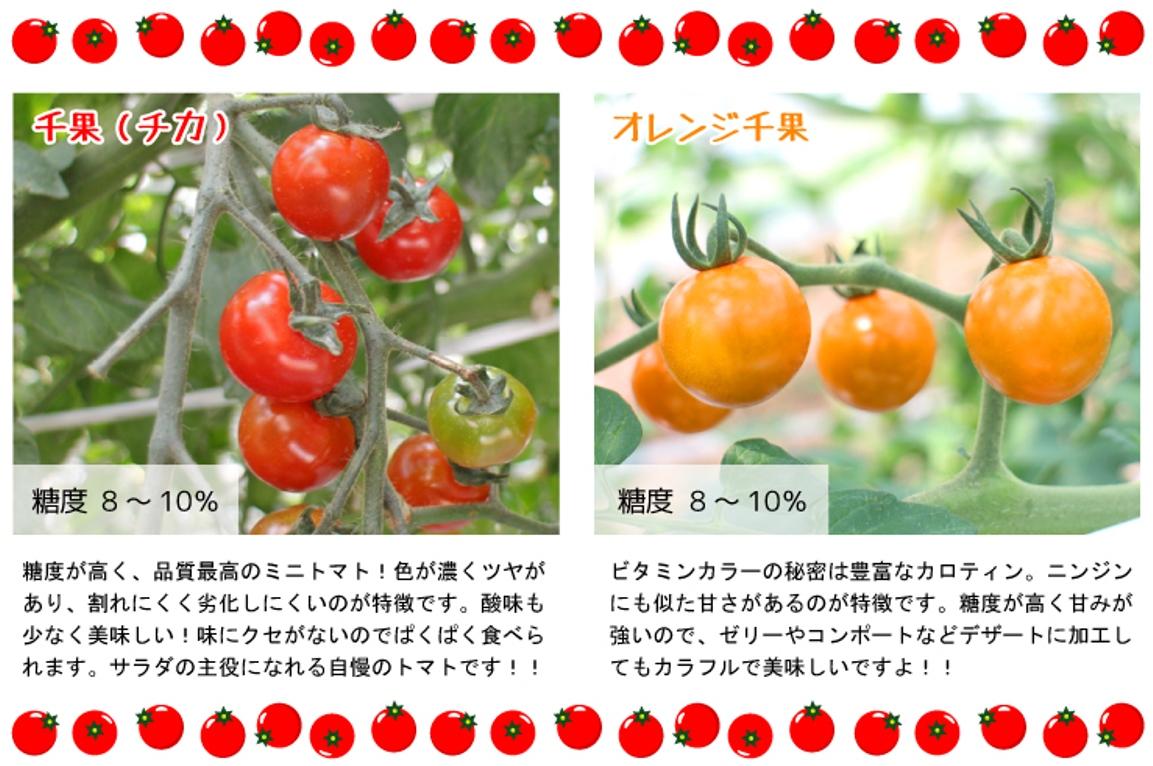 真っ赤なフルティカ、ビタミンカラーのオレンジ千果