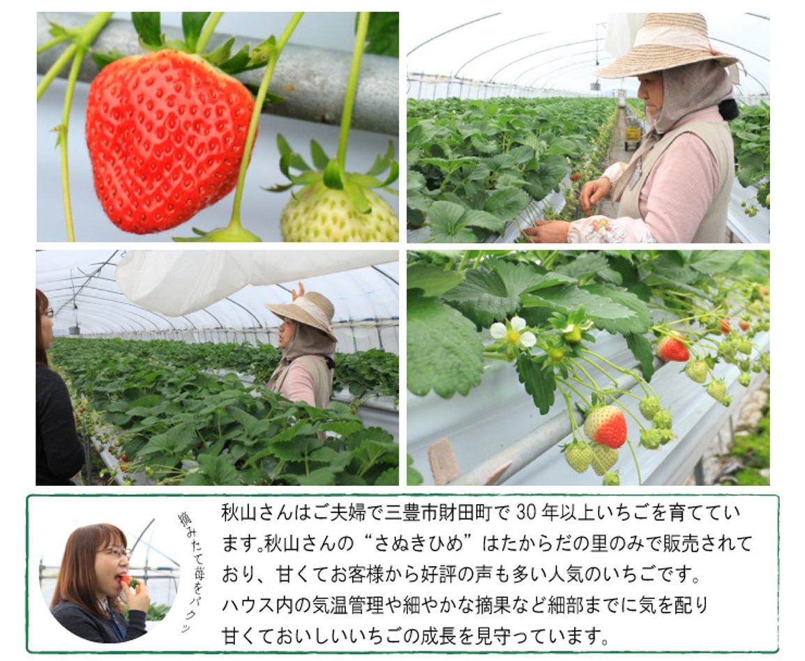 秋山さんの作るさぬきひめは、たからだの里のみで販売されるレアいちご。甘くて美味しいと人気のいちごです。