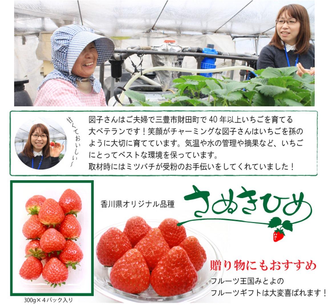 図子さんは40年以上いちごを育てる大ベテラン!受粉はミツバチがお手伝い。
