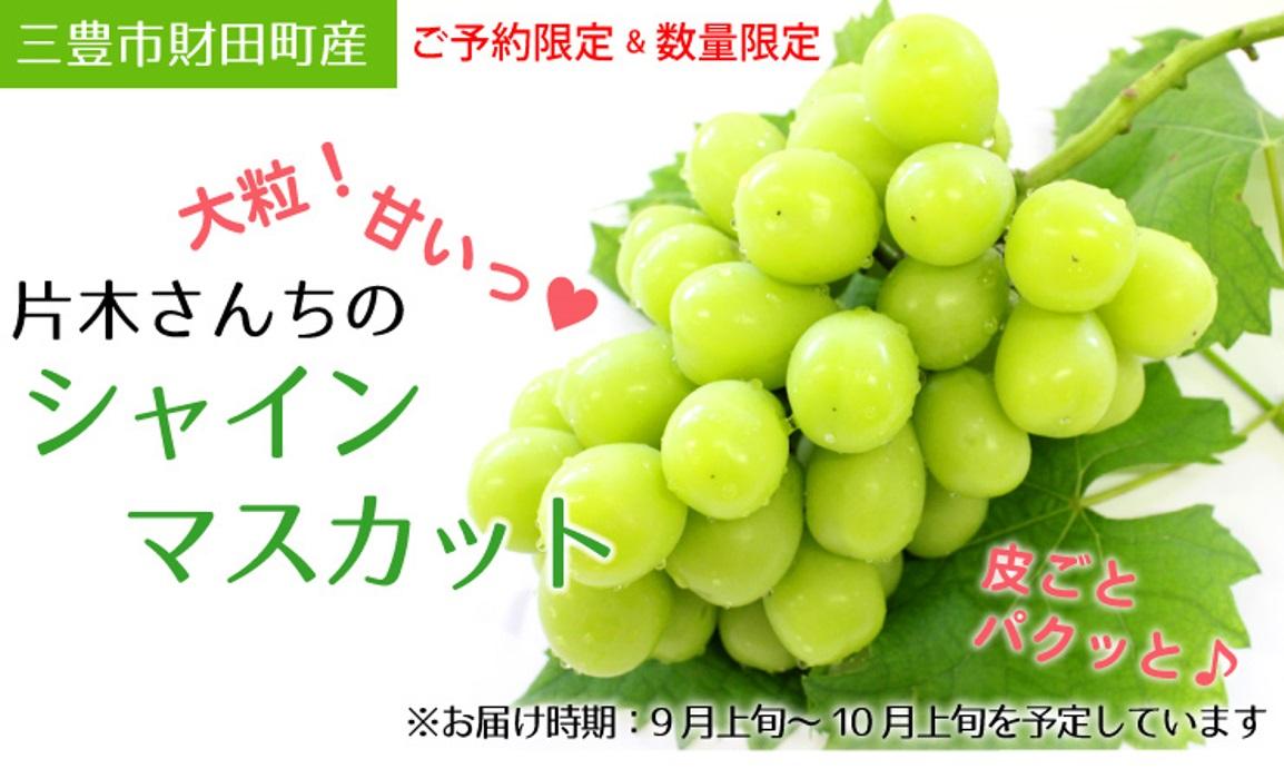 香川県三豊市財田町産 片木さんちのシャインマスカット